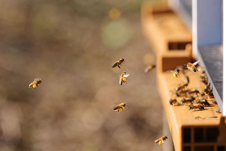 bijvriendelijk asperges telen bijenkast